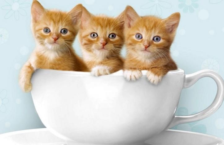 8 Hal yang Seringkali Menjadi Penyebab Kucing Muntah, Nomor 6 Paling Parah