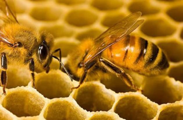 Subhanallah, Lebah juga Butuh Istirahat Karena Mereka Membutuhkan Ketenangan